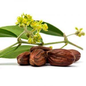 gnooss-boutique-huile-jojoba-plante